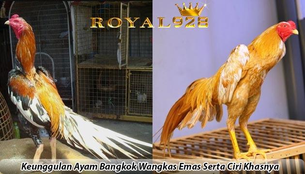 Keunggulan Ayam Bangkok Wangkas