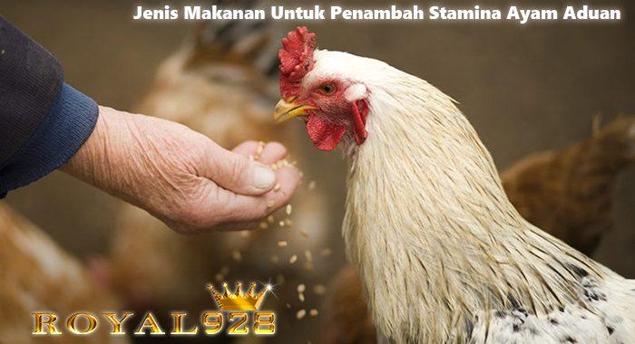 Jenis Makanan Untuk Penambah Stamina Ayam Aduan